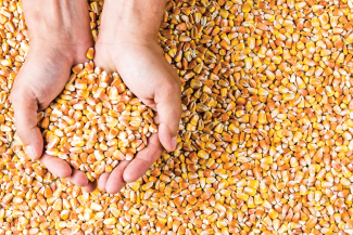 6 Reasons Why Grain Auditors Appreciate AGRIS